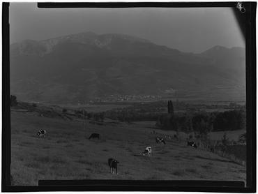 Imatge 1079904 - Camps de pastura a Alp