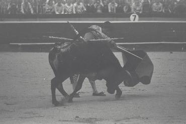 Imatges del reportatge 779471 - Cursa de braus a Girona