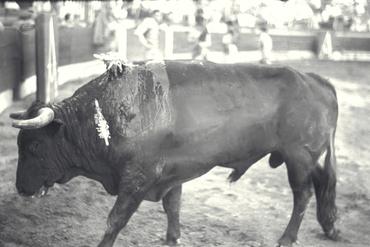 Imatges del reportatge 779084 - Corrida de toros a Girona