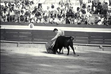 Imatges del reportatge 779074 - Cursa de braus a Girona