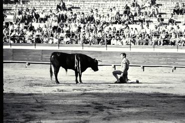 Imatges del reportatge 779536 - Cursa de braus a Girona