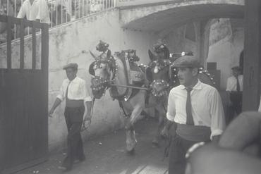 Imatges del reportatge 779579 - Corrida de toros a Girona