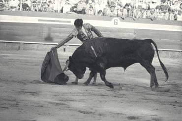 Imatges del reportatge 779682 - Cursa de braus a Girona