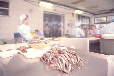 Imatges del reportatge 780949 - Factoria Anxoves de l'Escala