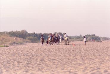 Imatges del reportatge 781000 - Cavalls a la platja