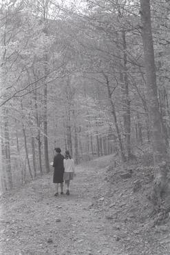 Imatges del reportatge 782817 - Anna Maurici Torrent amb Emili i Marta Hugas Maurici de passeig per un bosc de Tordera