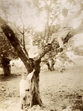 Imatge 51917 - Retrat de nens enfilats a un arbre