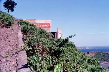Imatges del reportatge 781378 - Vinyes vora el mar de Banyuls