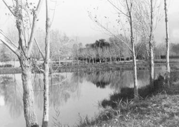 Imatge 54819 - Vista de l'estanyol del Vilar de Banyoles