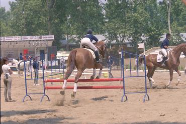 Imatges del reportatge 781640 - Fira Equus