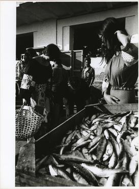 Imatges del reportatge 782680 - Llotja de peix de l'Escala