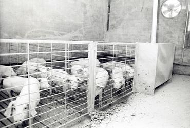 Imatges del reportatge 782780 - Granja de porcs