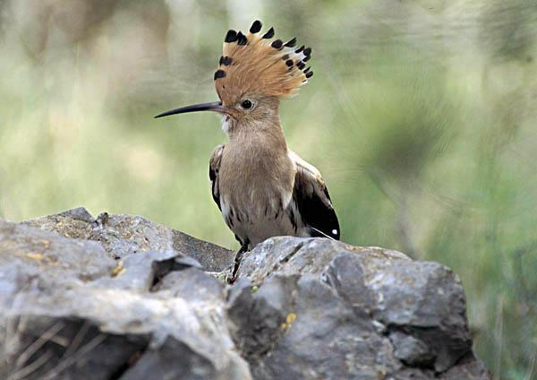 Fauna i natura de Girona